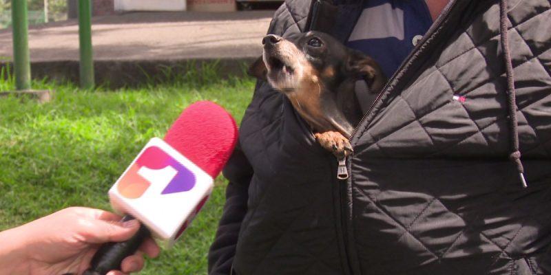 Perros vieron eclipse en Bogotá