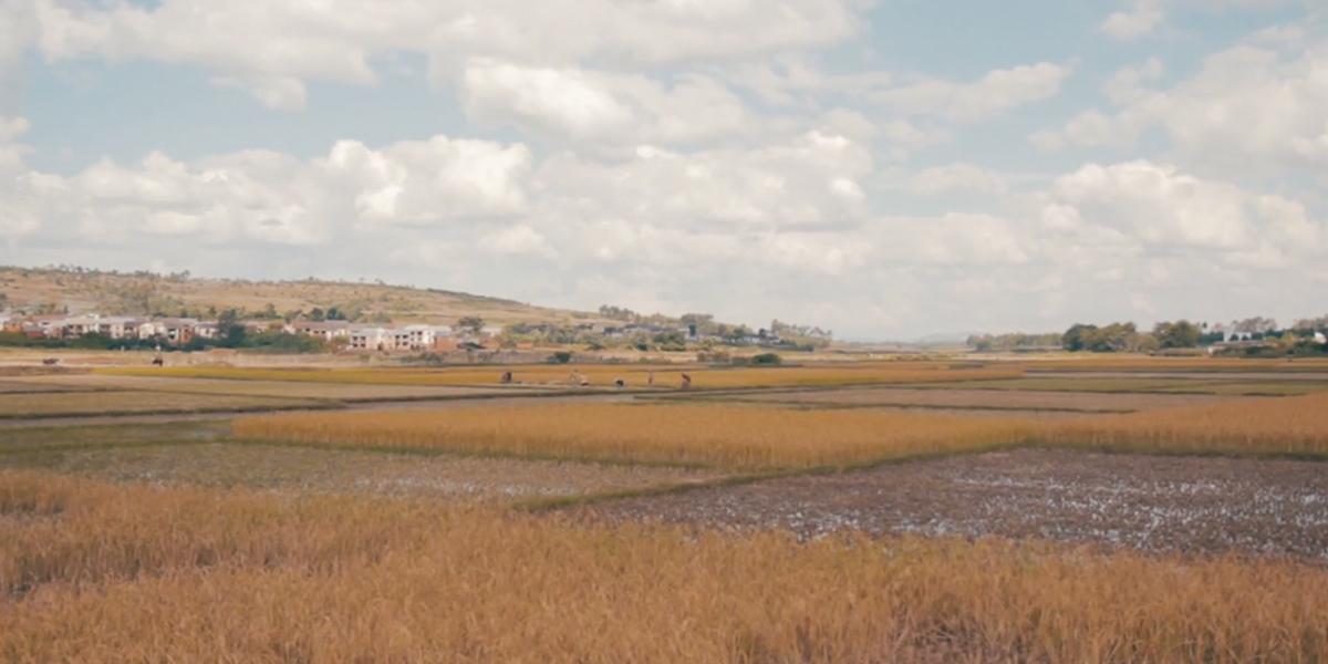 Madagascar, primer país del mundo en sufrir hambruna debido al calentamiento global
