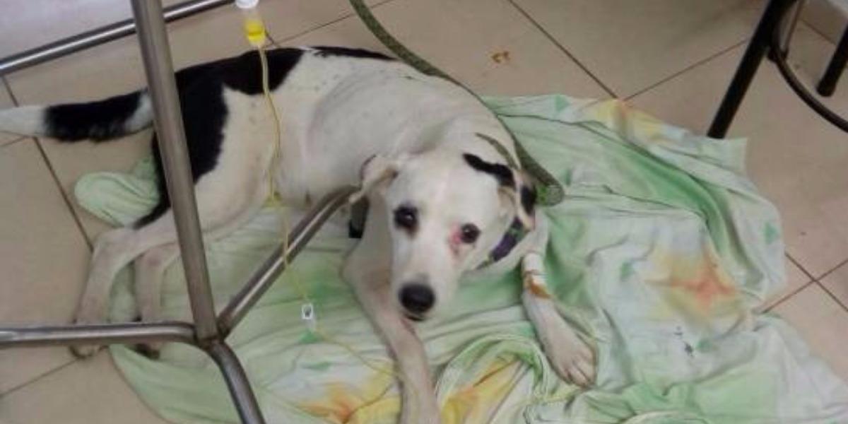 Foto cortesía médico veterinario Alejandro Sotomonte, de la Fundacion FANAT, tomada de Caracol.com.co.