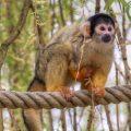 micos titi monos puente animales 1 - 123rf