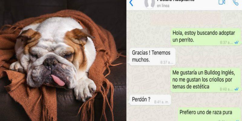 Chat de Whatsapp viral por respuesta de adopción de mascotas