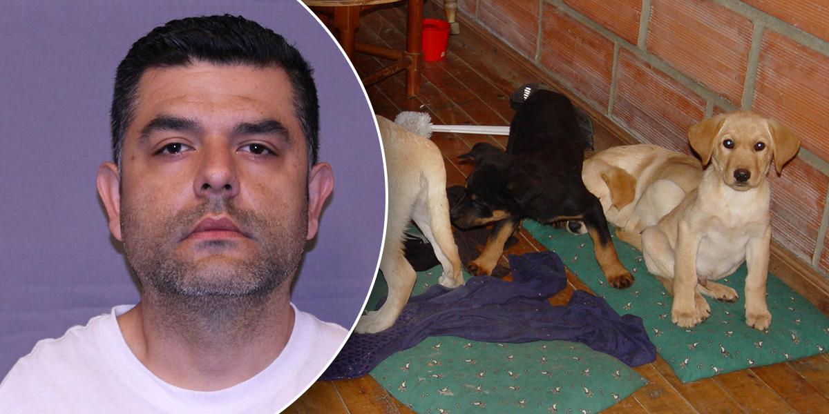 Implantaba heroína en perros