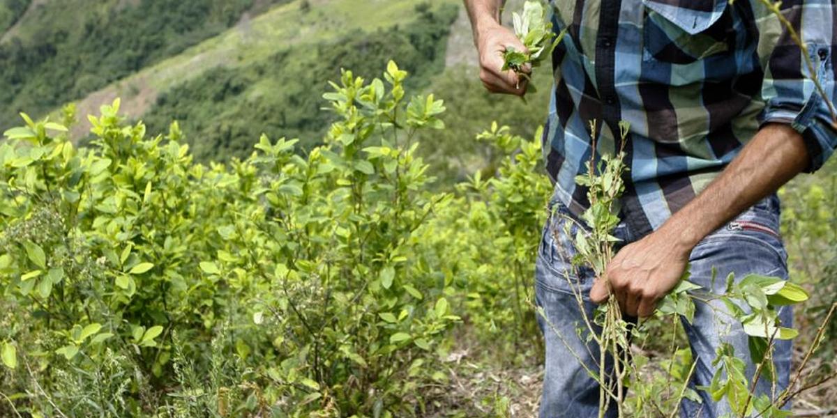 Así avanza proyecto para que productores agrícolas vendan sus productos sin intermediarios