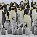 pinguinos antartida buque colombiano