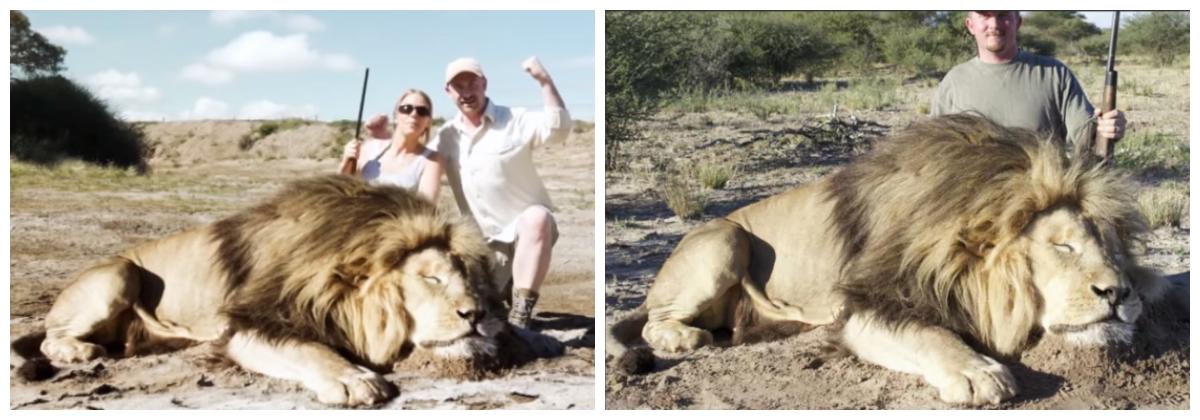video viral leon se come cazadores montaje