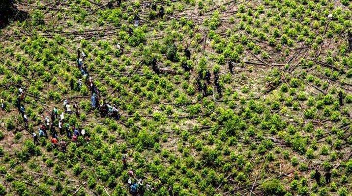 Dos soldados murieron tras activación de campo minado en Tumaco