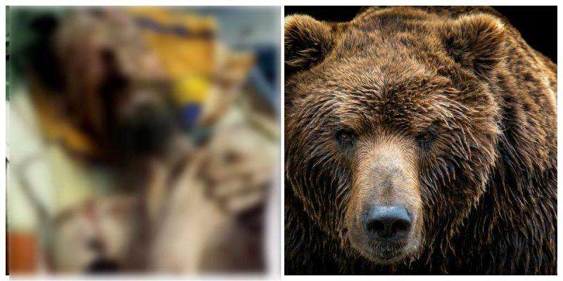 Sobrevivió un mes atrapado en la guarida de un oso
