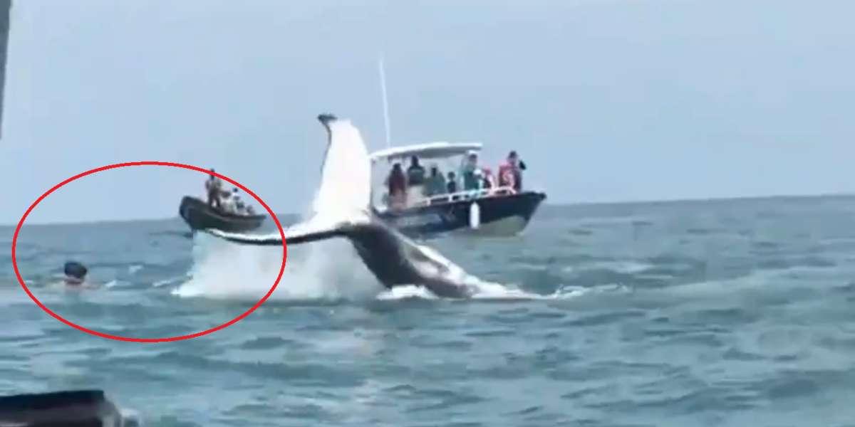 Video de turistas genera indignación porque alejarían a las ballenas del Pacífico colombiano