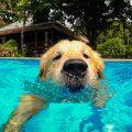 Patas al agua: crean un día de piscina exclusiva para perros