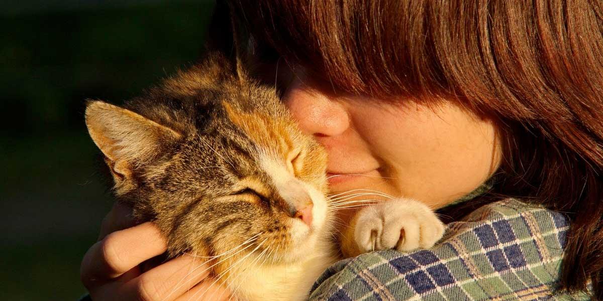 ¡Increible! Una mujer tiene casi 500 gatos como mascotas