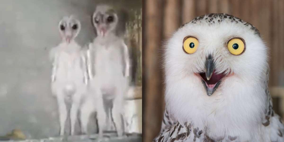 El impresionante video de unos búhos bebés que aseguran son extraterrestres