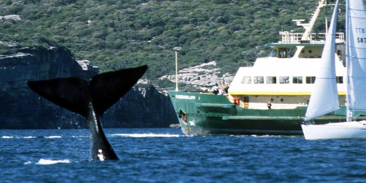 La ejemplar multa a un hombre por acercarse a una ballena
