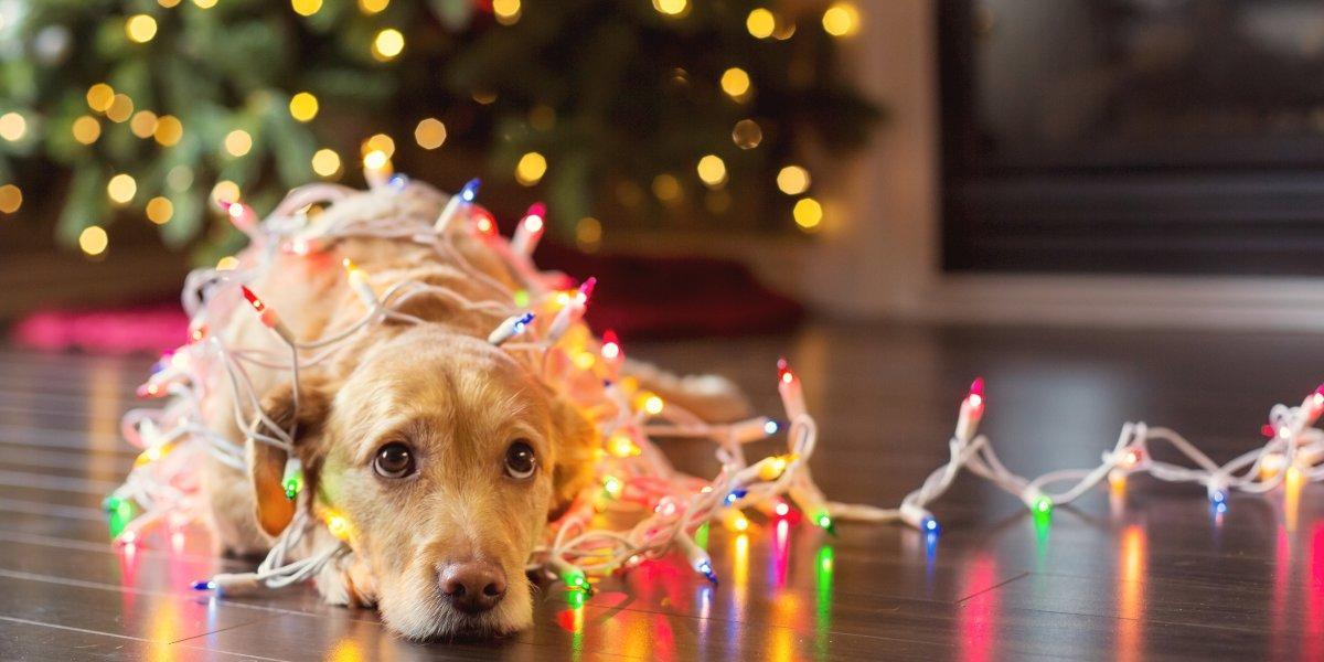 ¿Cómo cuidar a tus mascotas de los fuegos artificiales de diciembre?