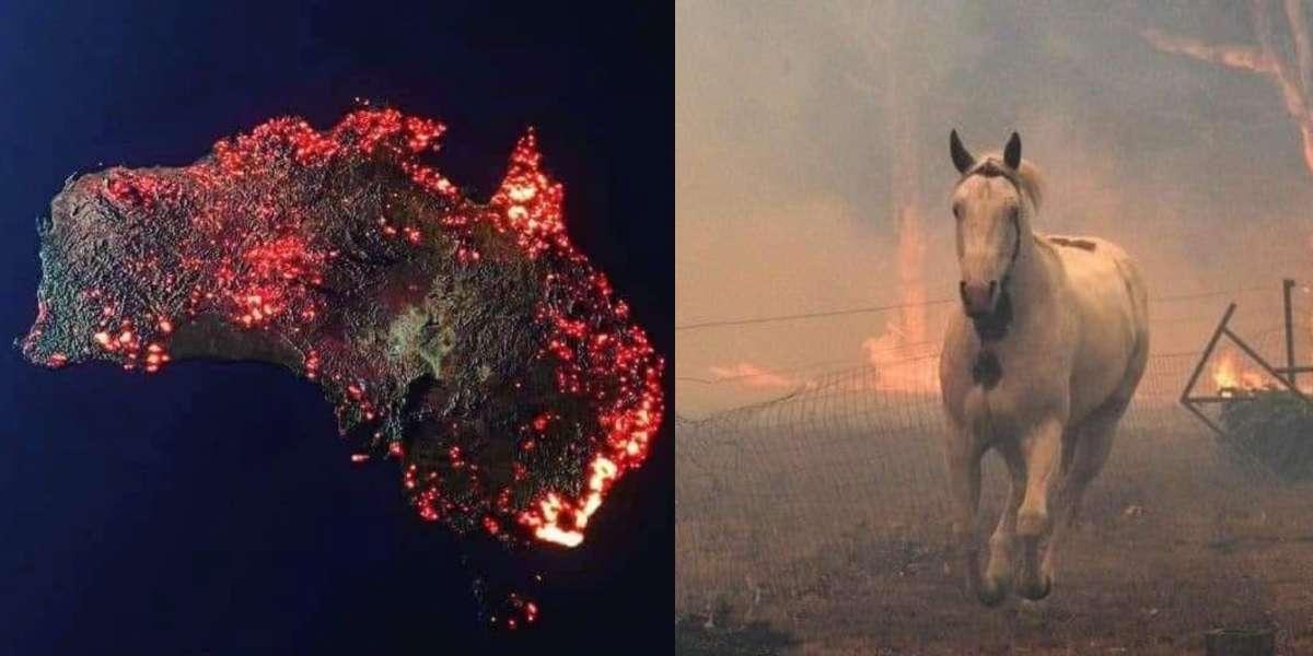 ¡No coma cuento! Mire cuáles son las fotos falsas de los incendios de Australia y las reales