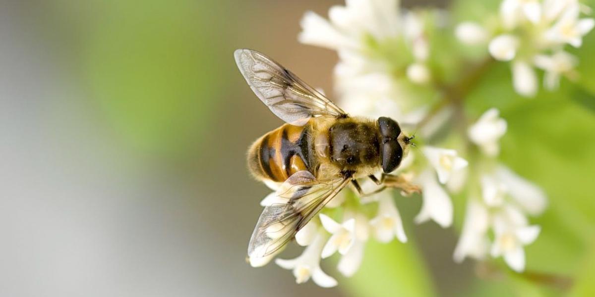 Histórico fallo ordena la protección de las abejas en el país