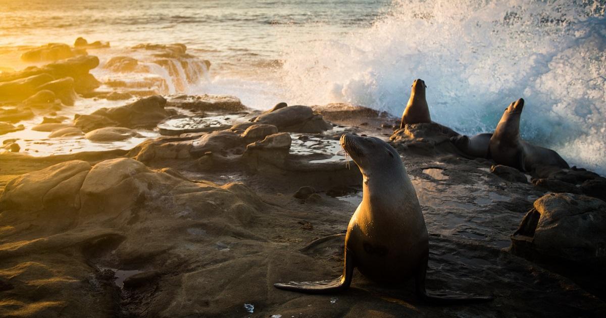 Foto de foca que parece cara de ser humano se vuelve viral y se convierte en memes