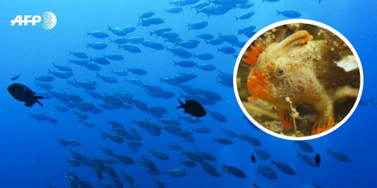 En video: Las impresionantes imágenes del pez que tiene manos