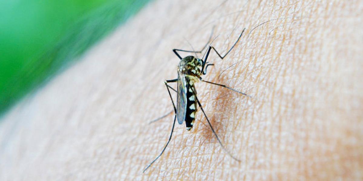 Se elevó el número de muertes por dengue en Cali