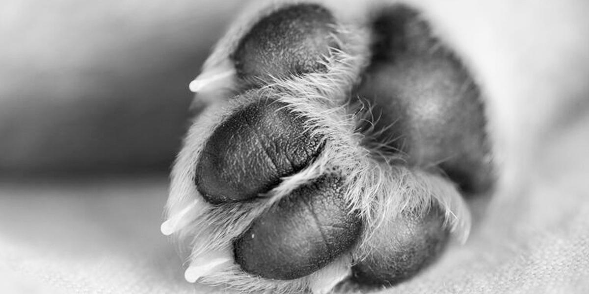 Caso de intolerancia: un hombre habría asesinado a un perro con arma blanca