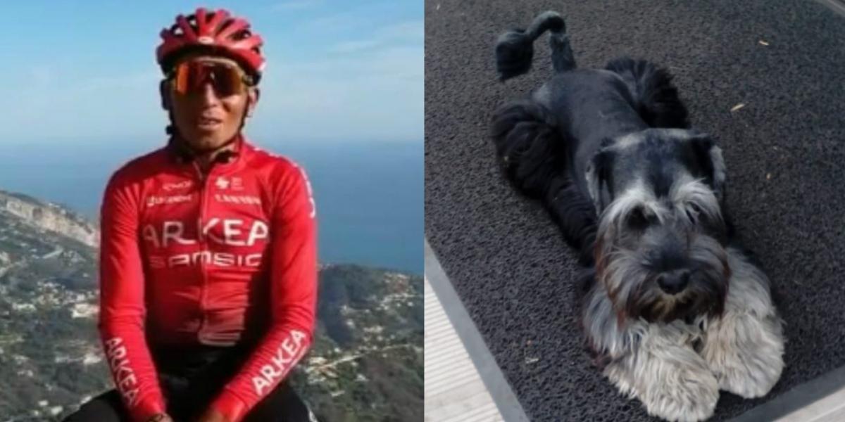 ¡Apareció Rocky! el perro de Nairo Quintana