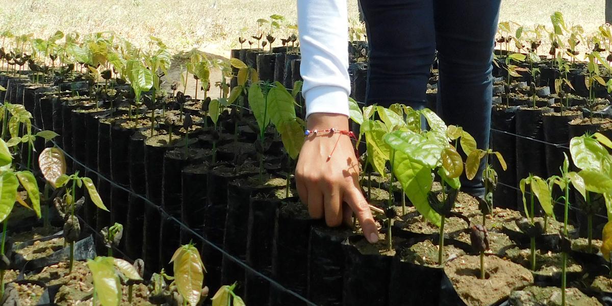 Casa Blanca destaca el compromiso del Gobierno colombiano en la lucha por disminuir cultivos de coca