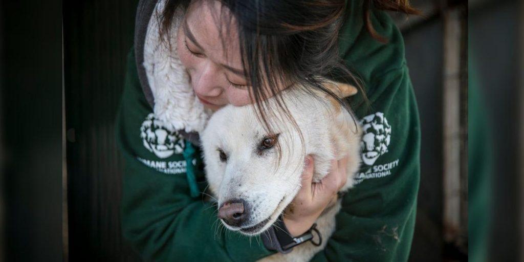 Perros y gatos abandonados por Coronavirus empiezan a morir de hambre