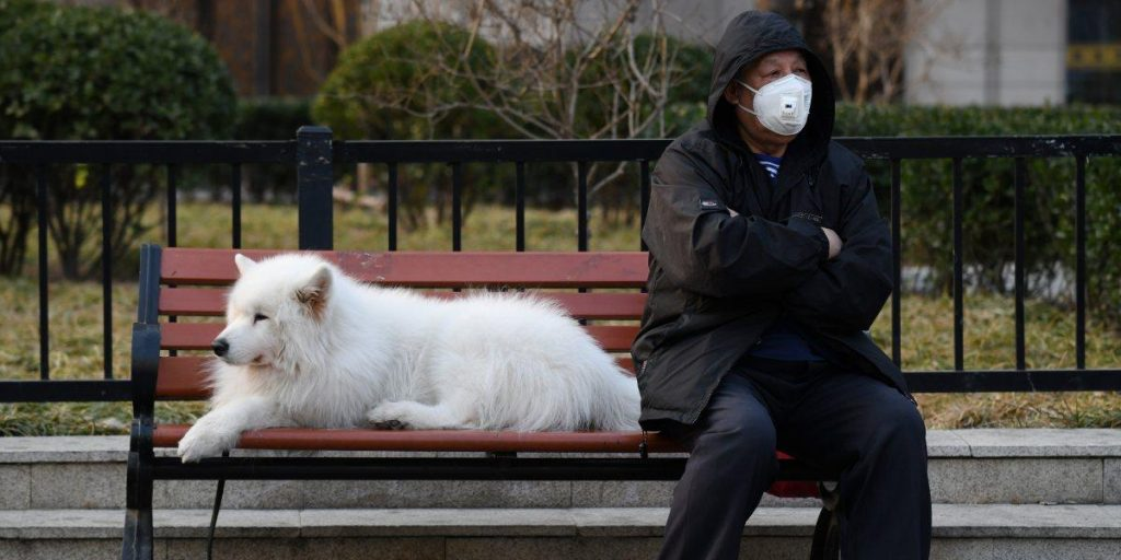 Perros abandonados por el Coronavirus
