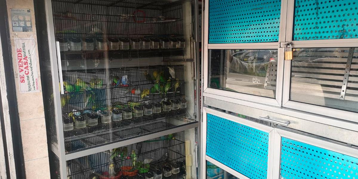 Realizan operativos a establecimientos de comercio donde aún permanecen animales