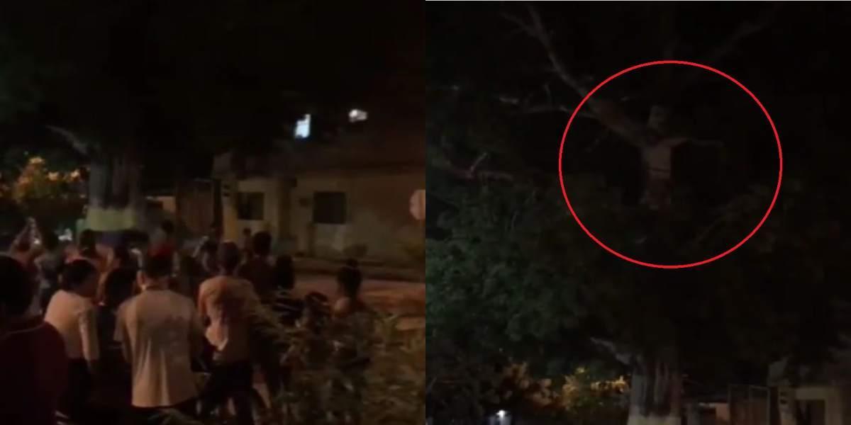 jesus en un árbol