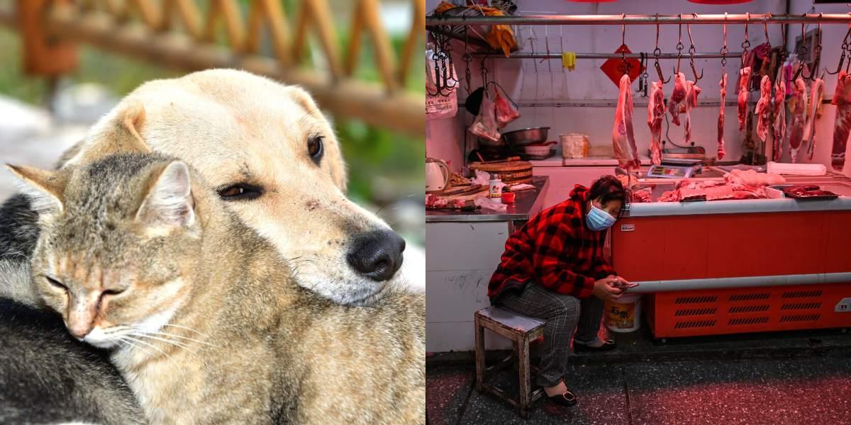 perros y gatos ya no se comen en una ciudad en China