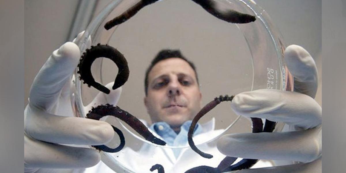 Hasta en la sangre de los gusanos marinos se busca el tratamiento para el Covid-19