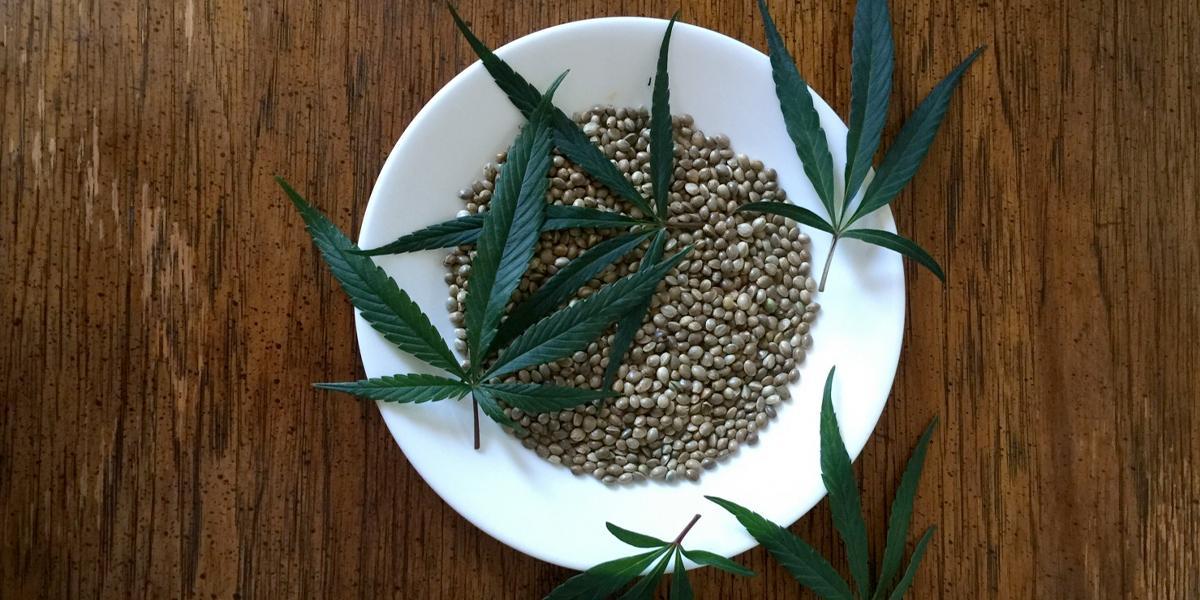 MinJusticia autorizó la primera exportación de 100.000 semilla de Cannabis