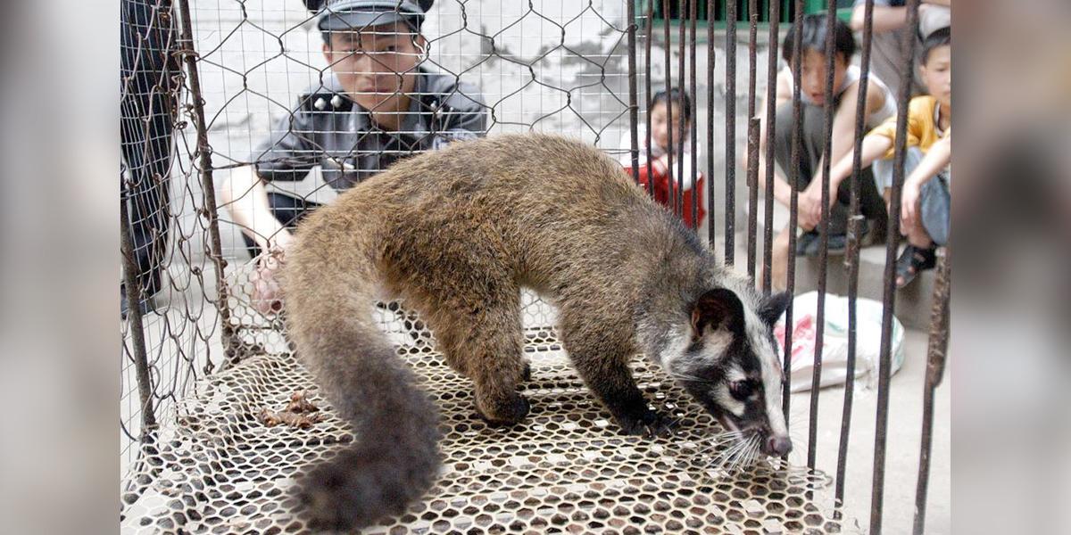 China comienza la lucha para erradicar el tráfico y consumo de animales salvajes