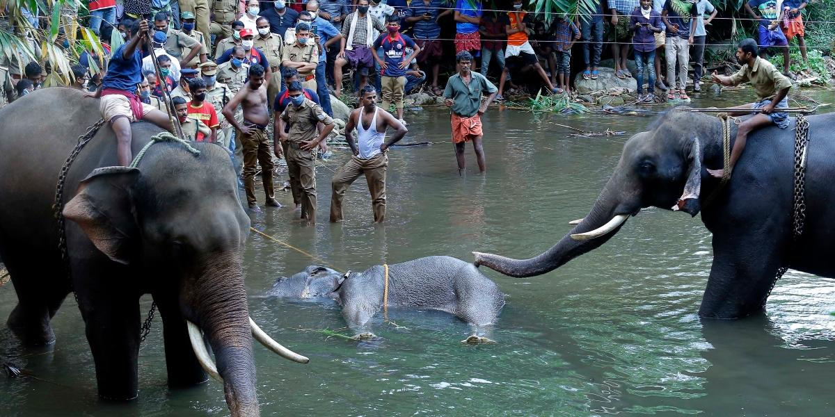 elefante muerte