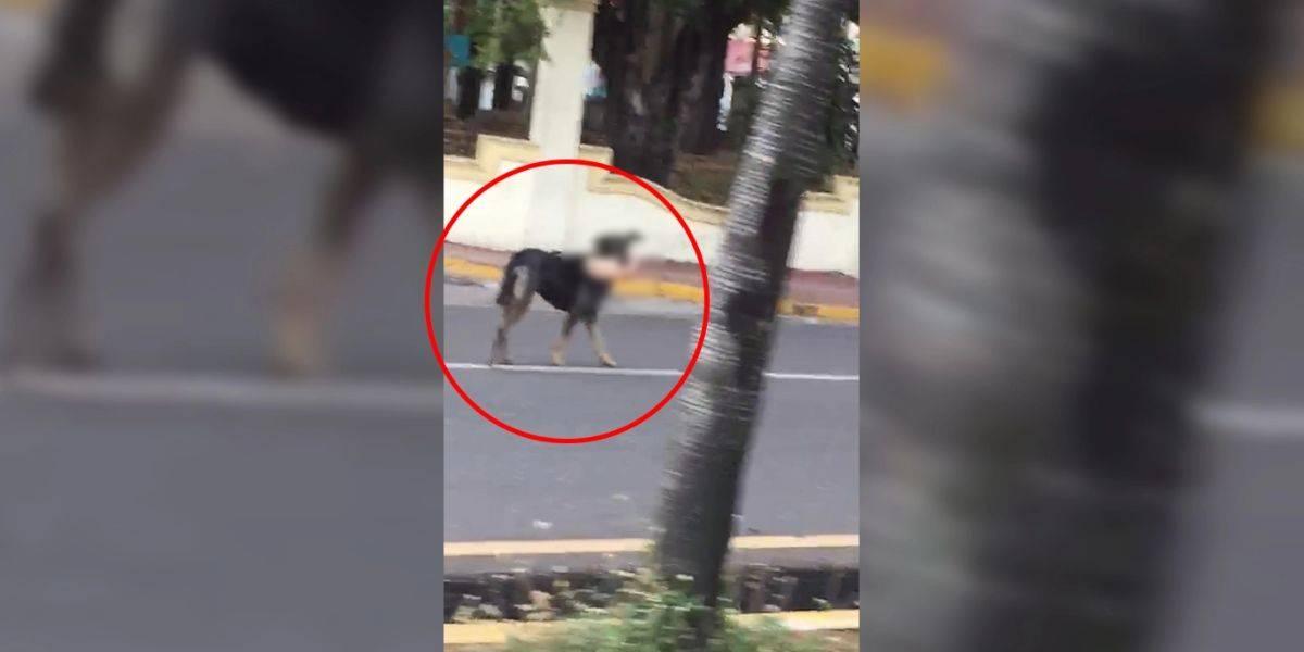 perro pie humano santiago de chile video