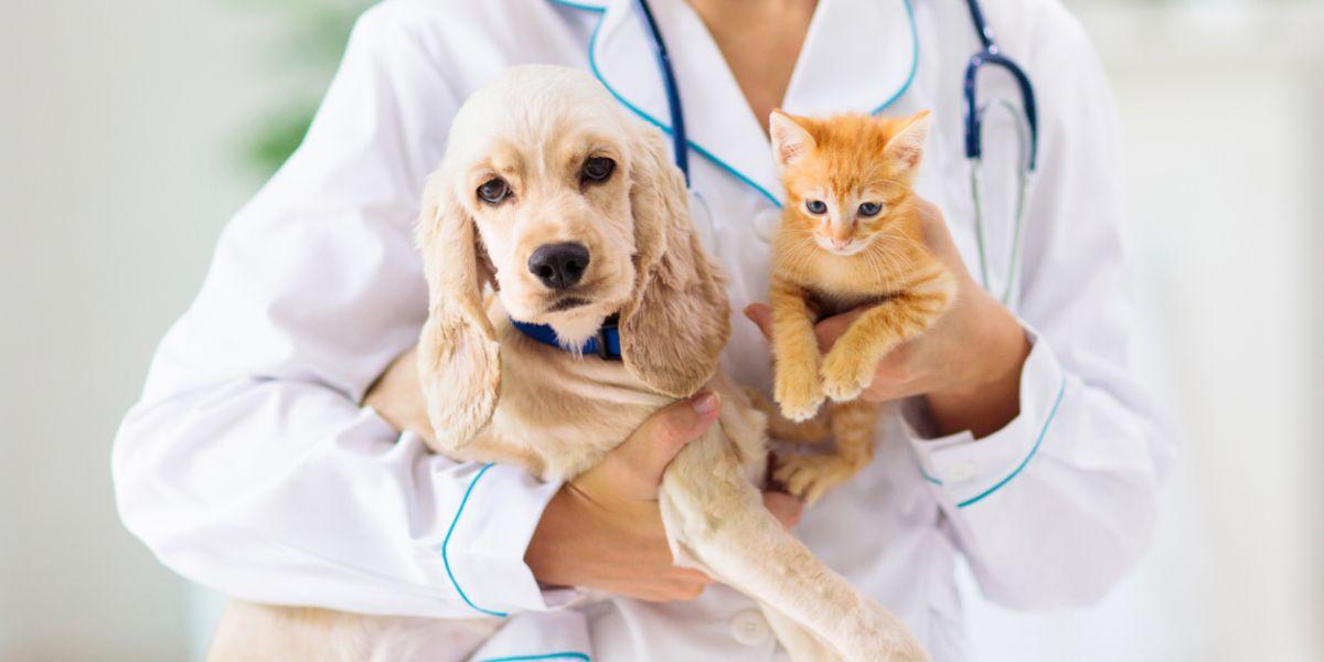 bogota esterilizacion mascotas perros gatos