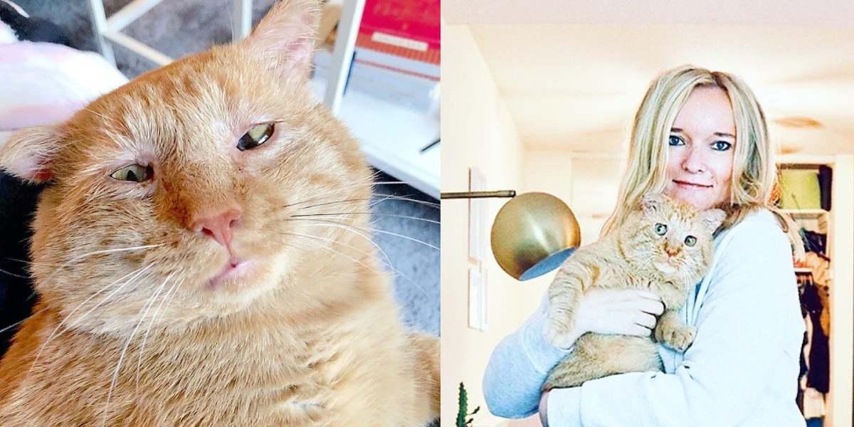 Tierna transformación de un gato callejero tras ser adoptado