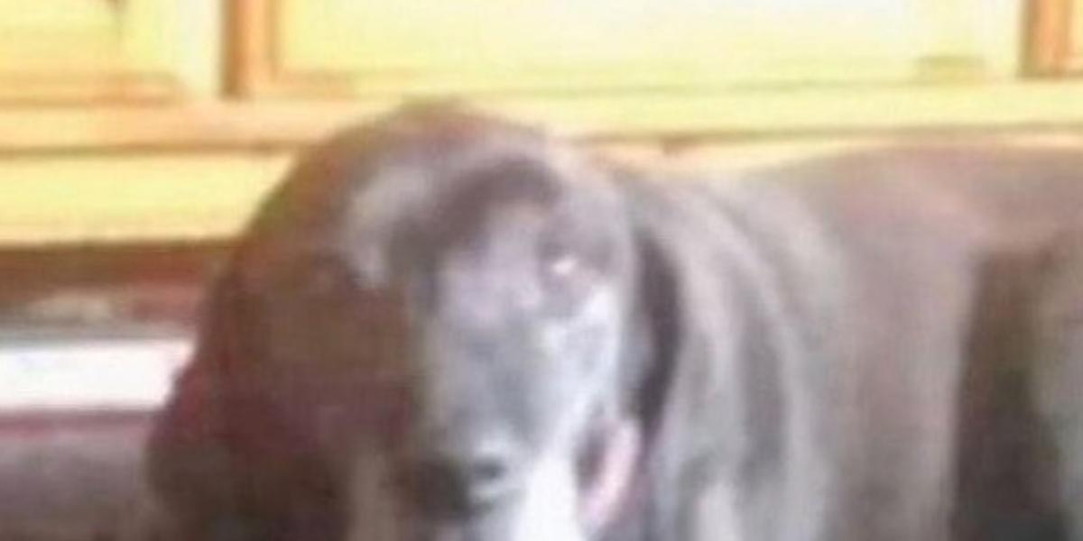 Reto viral del perro y el payaso