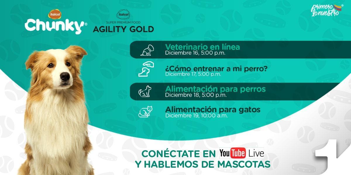 Canal 1 e Italcol se unen para hablar sobre el correcto cuidado de las mascotas