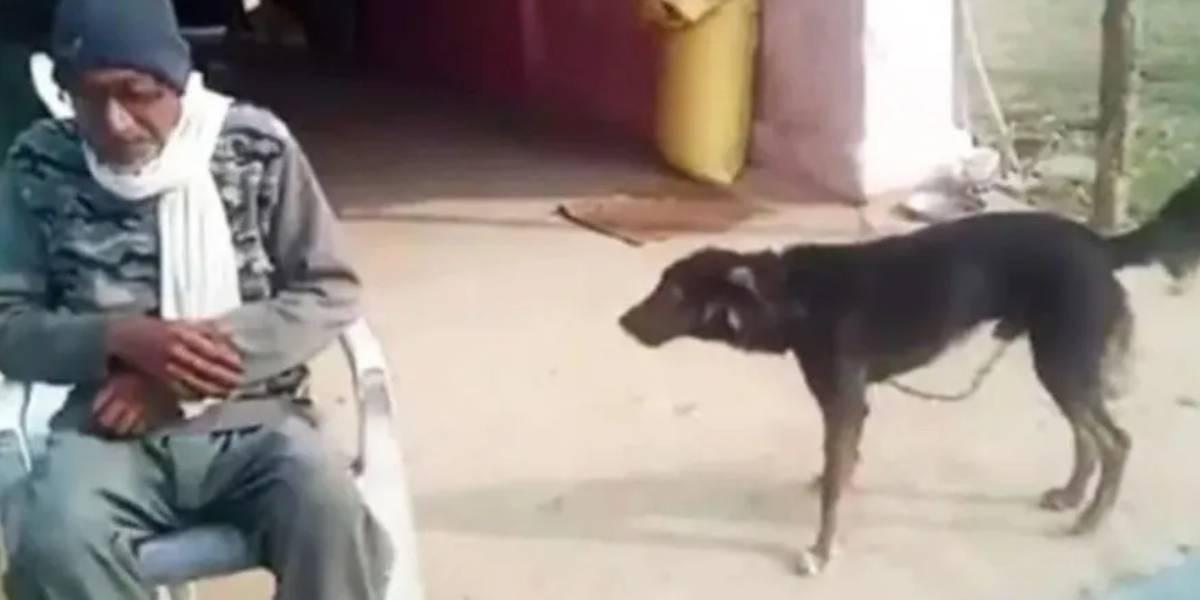 Granjero dejó herencia a su perro en la India