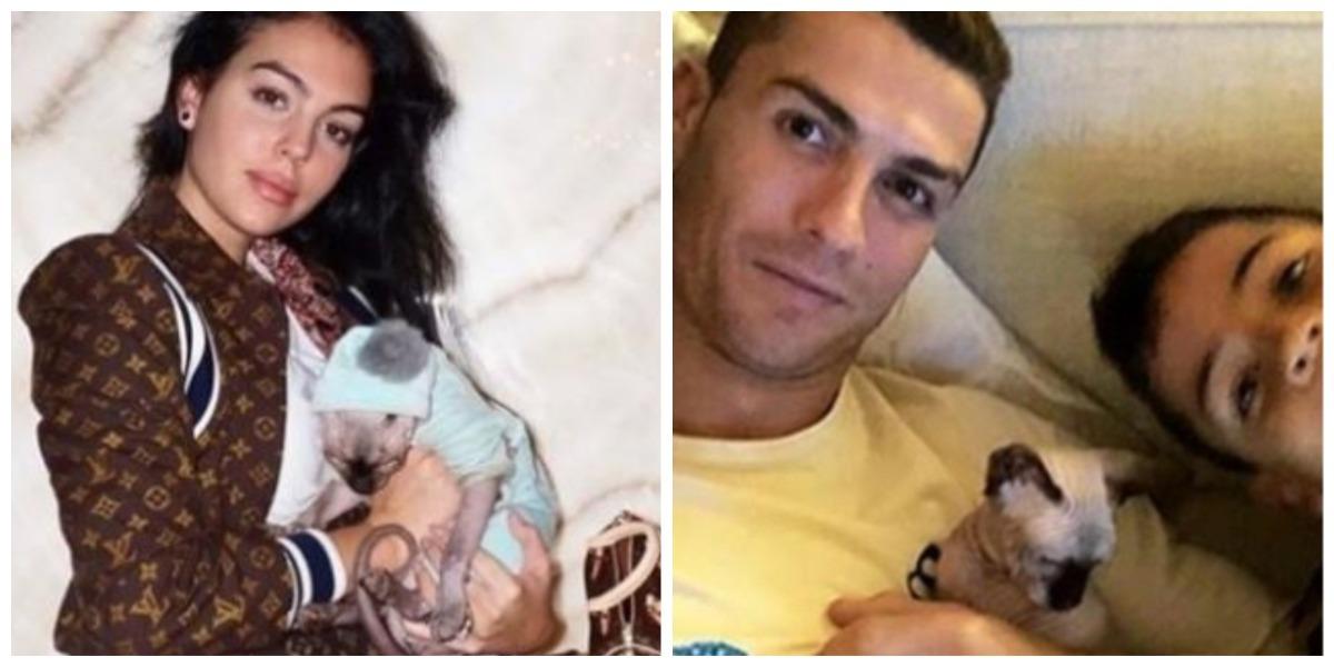 Gato de Cristiano Ronaldo fue atropellado