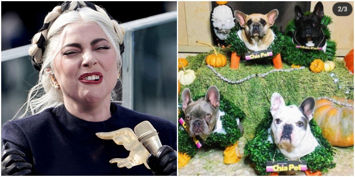 Lady Gaga ofrece recompensa por sus perros robados