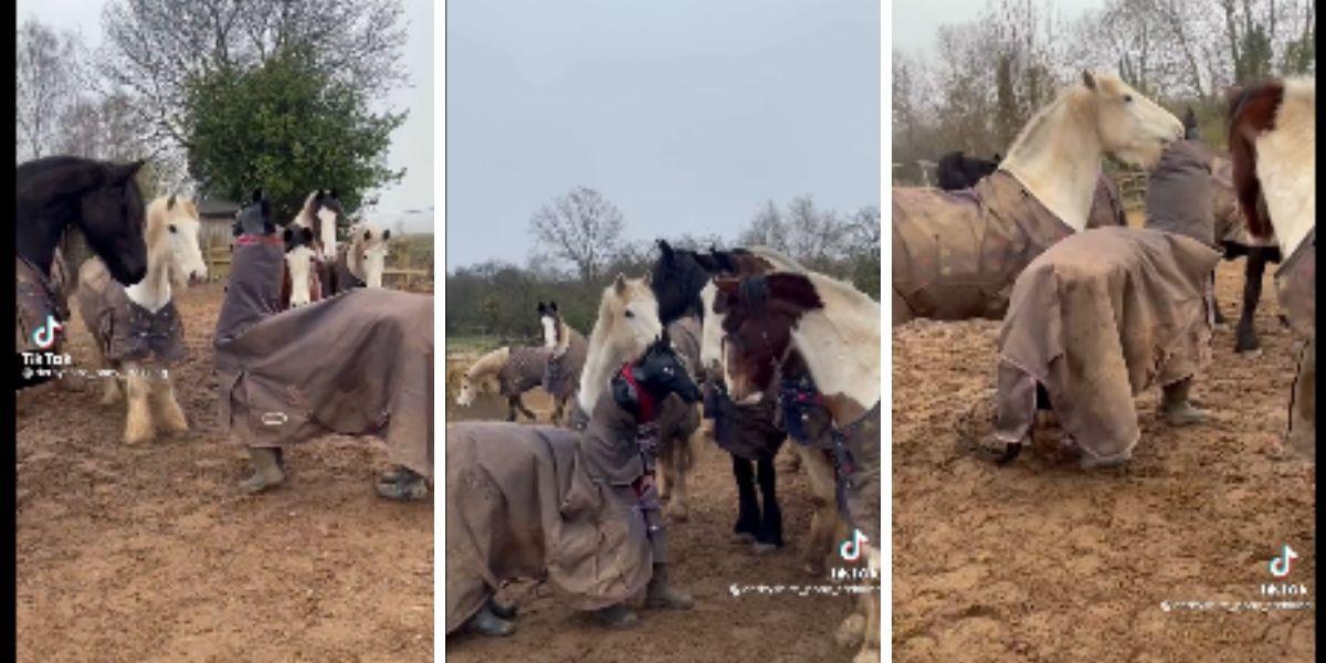 Personas se disfrazan y confunden a los caballos