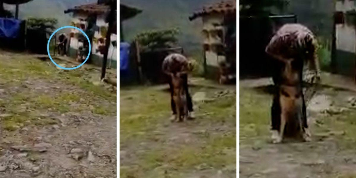 video maltrato a perro en centro de entrenamiento