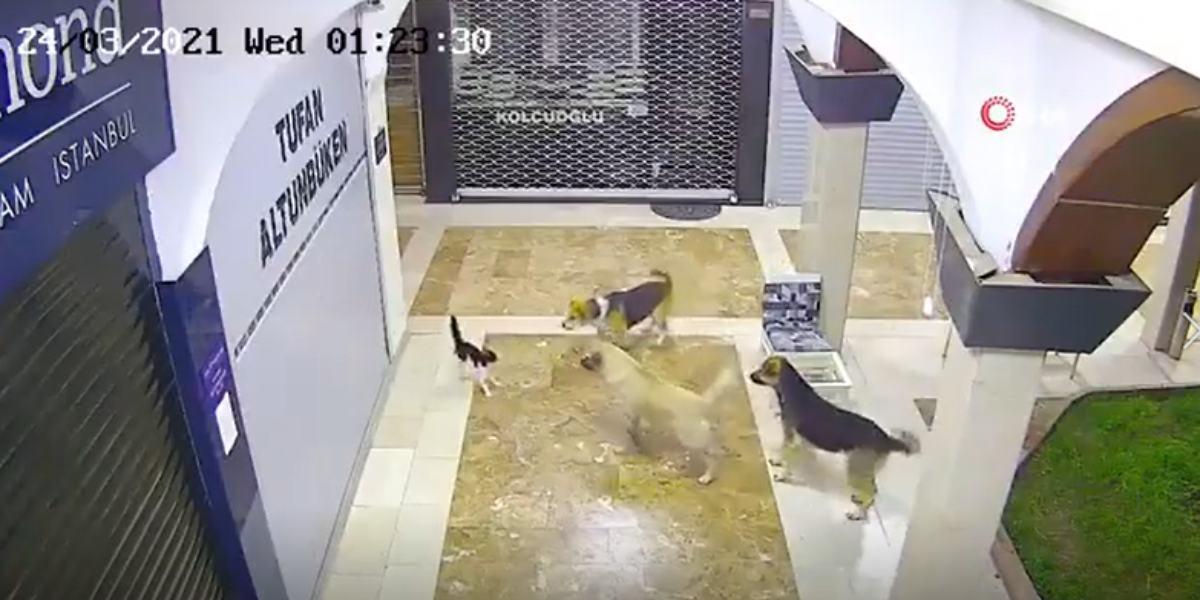 video gata perros