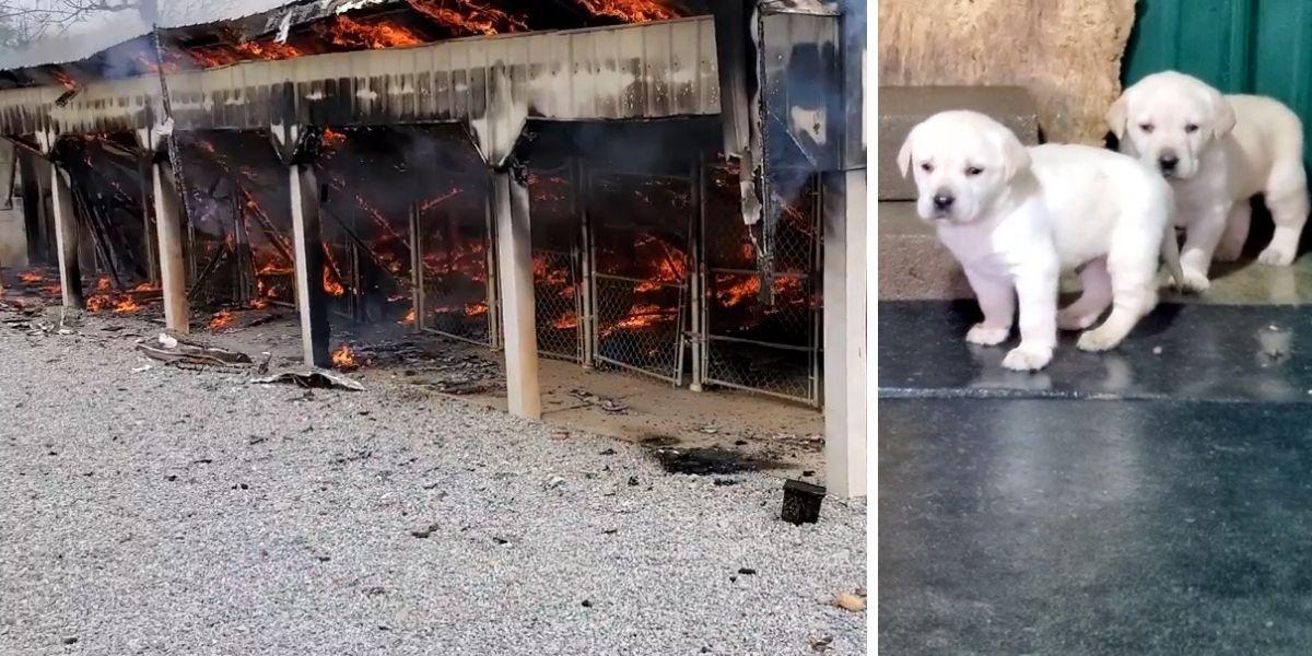 perros que fallecieron en un incendio dentro de un criadero