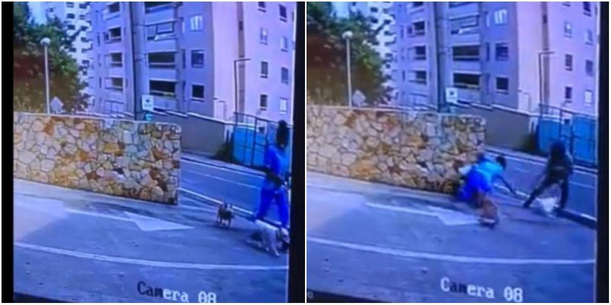 Video robo perro en Cali