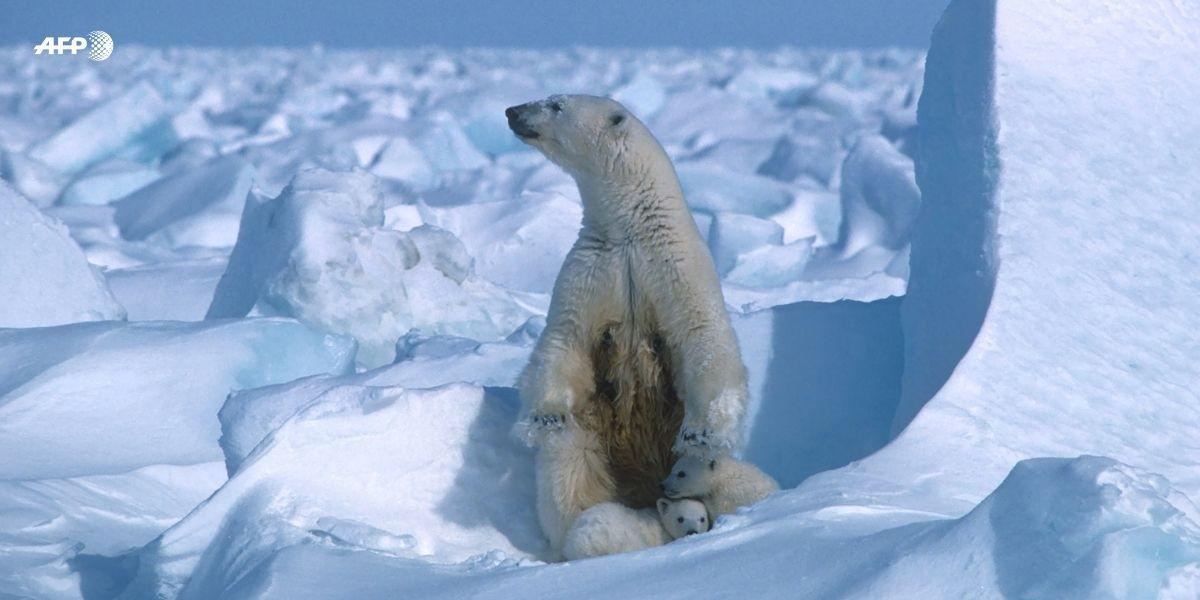 efectos del calentamiento global