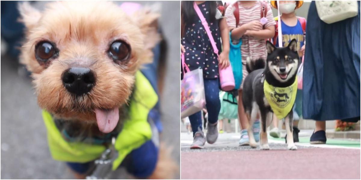 patrulla perro guau guau tokio japon niños