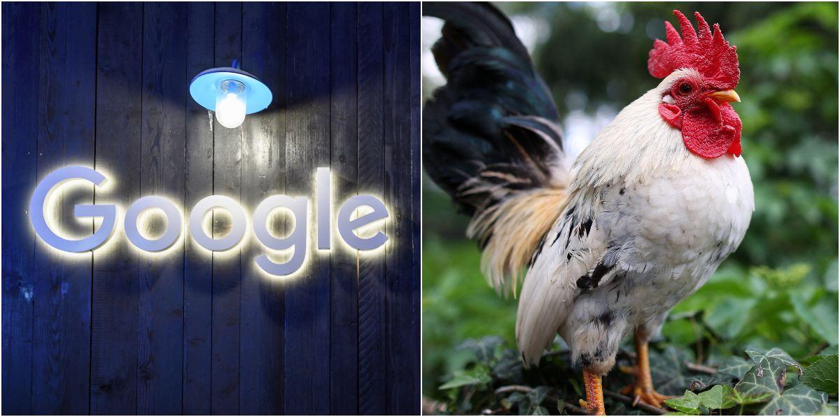 """Traductor de Google es motivo de burlas por pronunciación de la palabra """"Gallo"""""""
